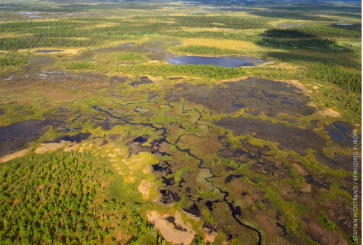 Peatland-in-Swedish-Lapland