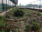 ZEOSZ: Green roof in Hungary 3