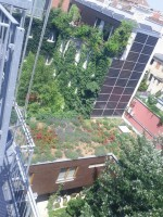 European Federation of Green Roof Associations - EFB: roof garden 3