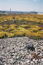 European Federation of Green Roof Associations - EFB: Sedum kanton