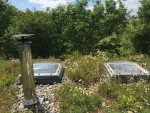 Livingroofs.org Ltd: green roof