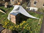 Livingroofs.org Ltd: Green roof, extensive bees